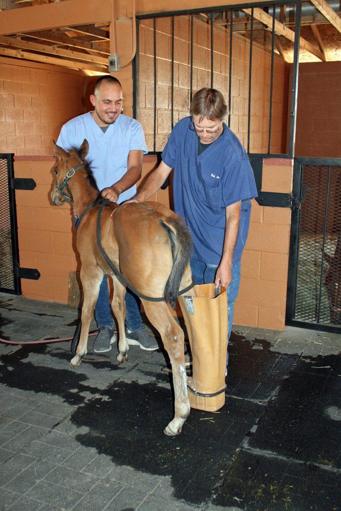 veterinarian care of horses
