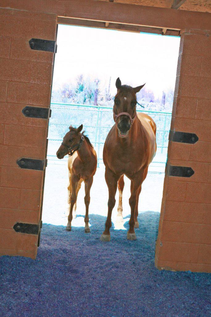 veterinarian horse care