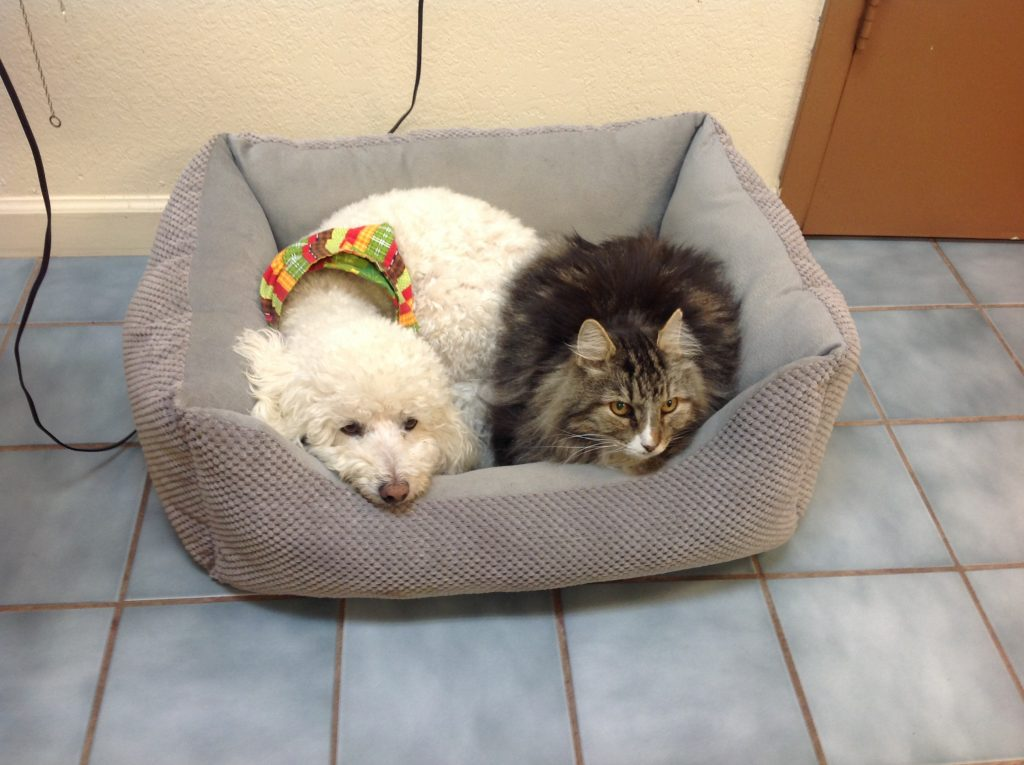 dog and cat vet care