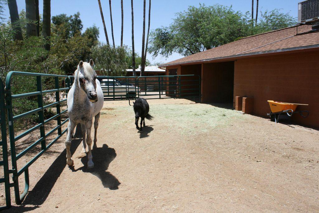 horse vet care